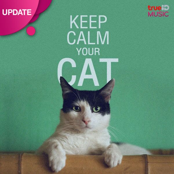 Keep Calm Your Cat