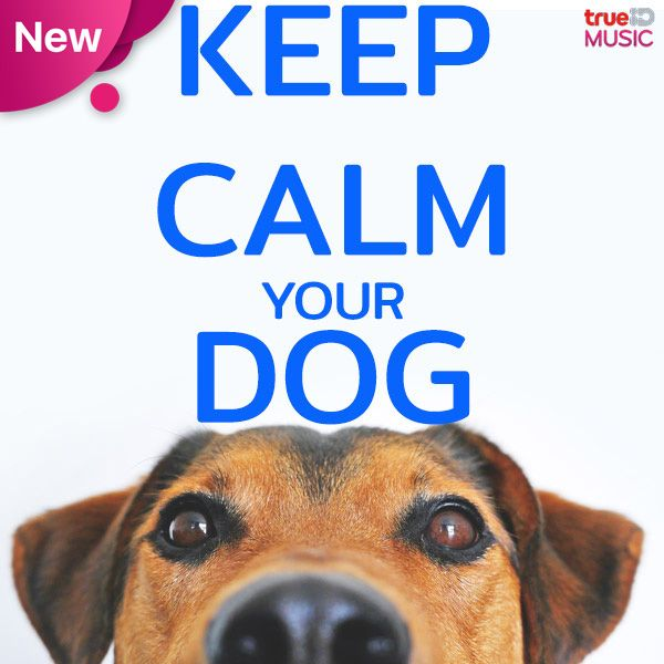 Keep Calm Your Dog